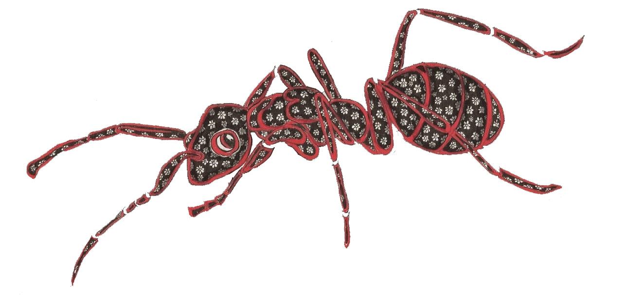 Retour sur l'atelier «Nos amis les insectes» animé par Fatiha El Hadi