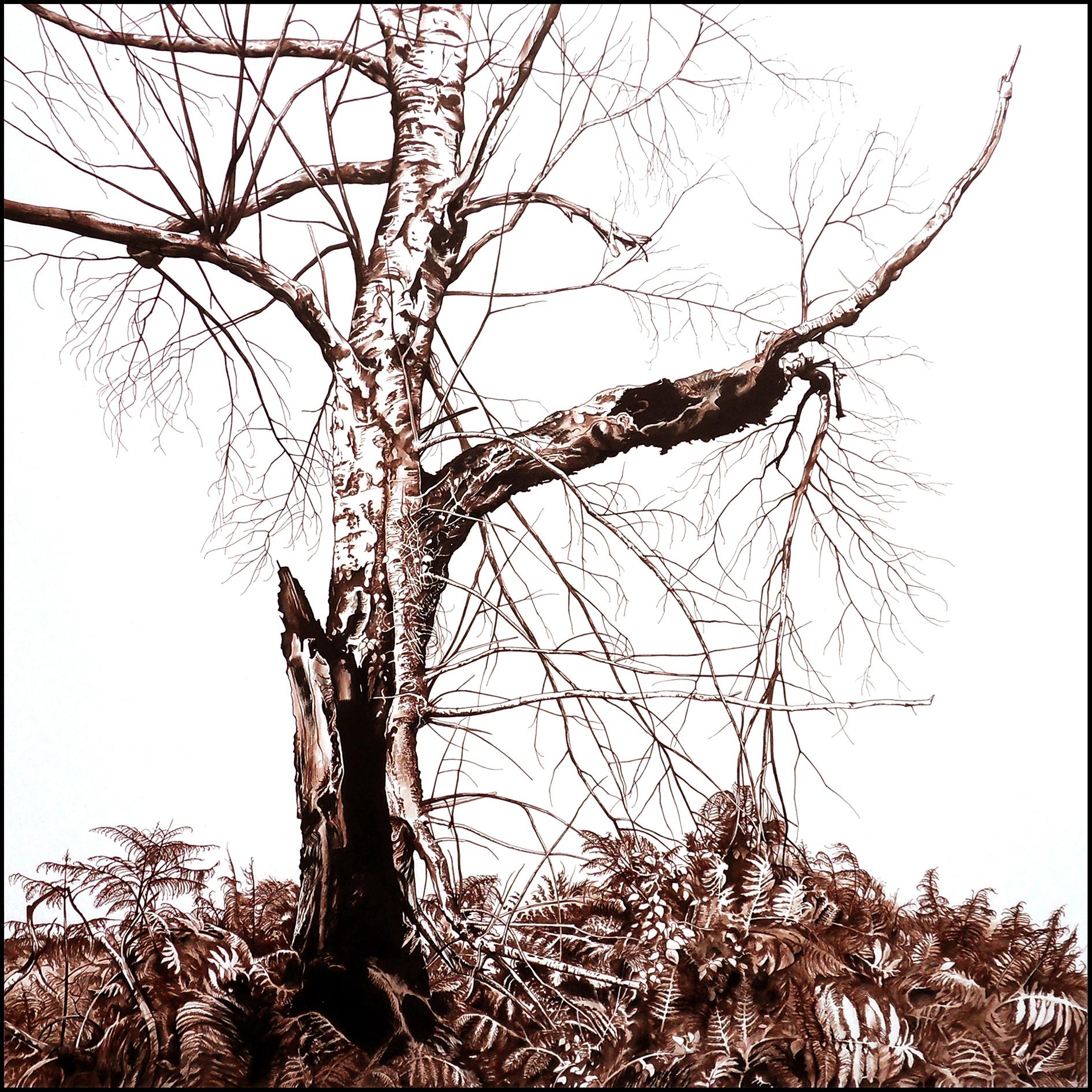 Thrénodie pour un arbre – dessins et photographies de Laurent Claret