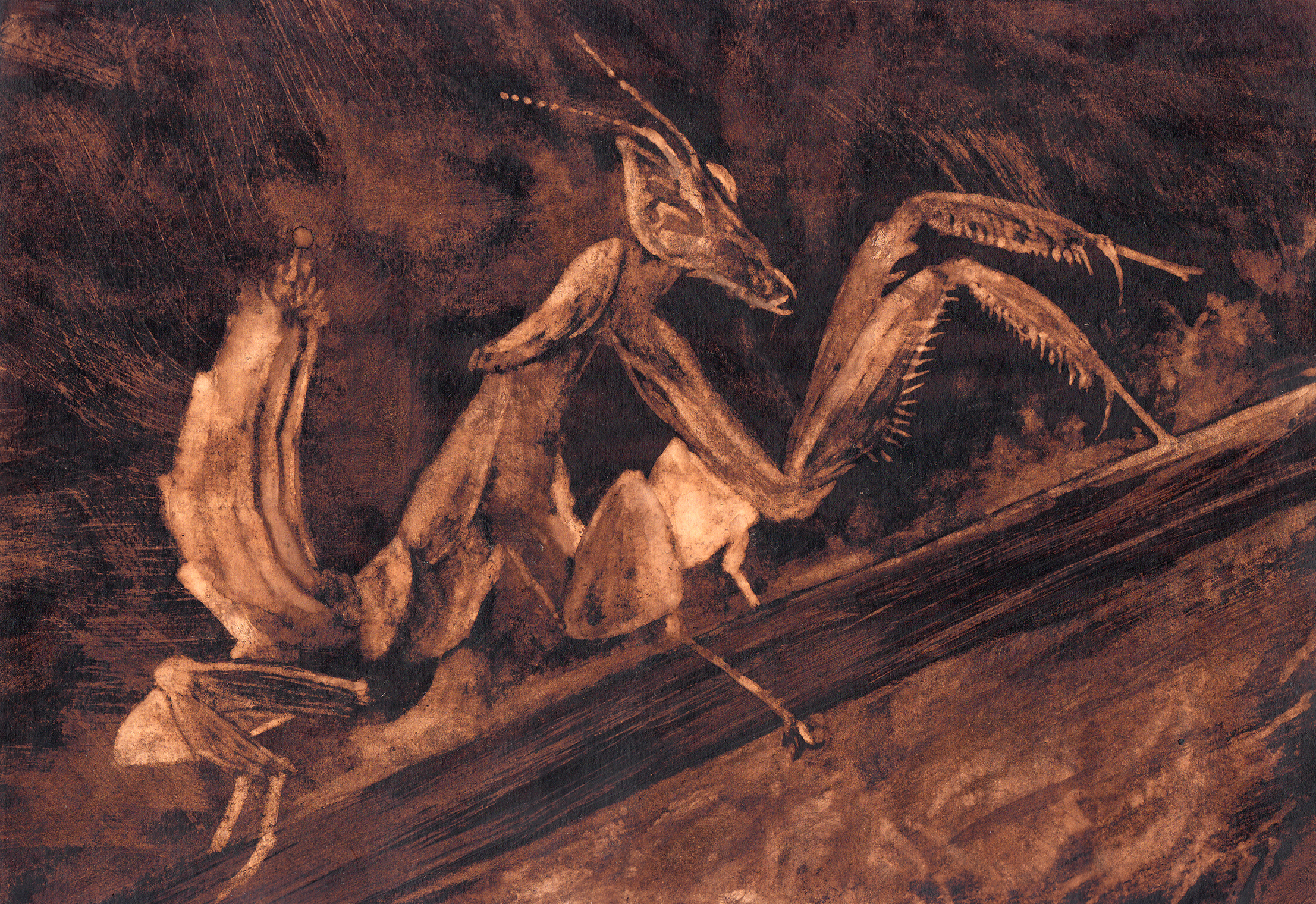 Atelier «Phasmes et autres fantômes» – dessin en retrait sur terre de Cassel, animé par Laurent Claret